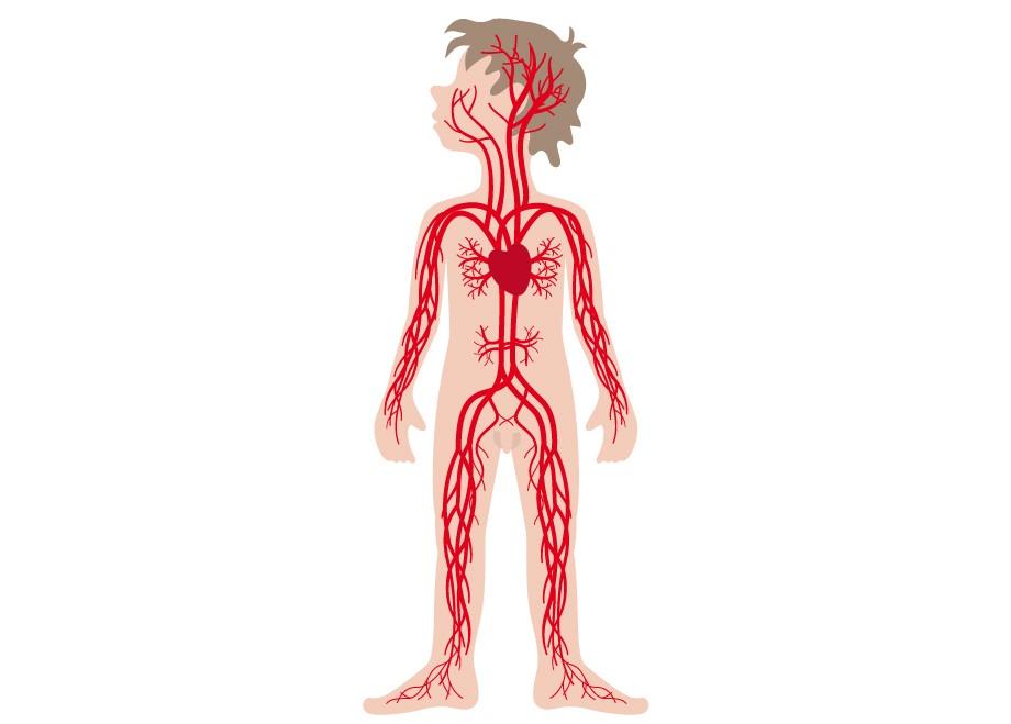 blod i kroppen
